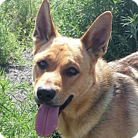 Adopt A Pet :: Wiley - Foster/Adopter Needed - Kirkland, WA
