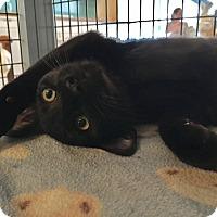 Adopt A Pet :: Gepetto - Deerfield Beach, FL
