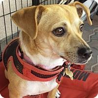 Adopt A Pet :: Sandy - Lancaster, CA