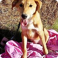 Adopt A Pet :: Rachel in CT - Manchester, CT