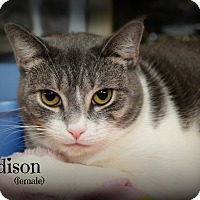 Adopt A Pet :: Madison - Springfield, PA