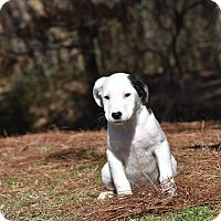 Adopt A Pet :: BeeBee - Groton, MA
