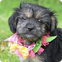 Adopt A Pet :: Miss Matilda - Denver, CO