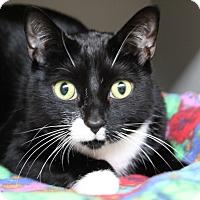 Adopt A Pet :: Hitch - Sarasota, FL