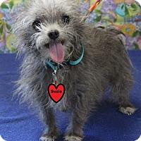 Adopt A Pet :: SUZIE - Gustine, CA