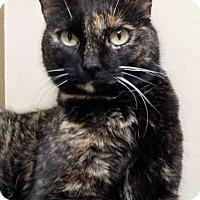 Adopt A Pet :: Tortilla - Oswego, IL