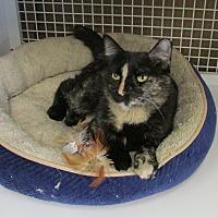 Adopt A Pet :: Babsie - Richmond, VA