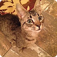 Adopt A Pet :: Buddy - East Hanover, NJ