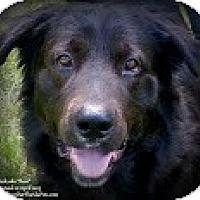 Adopt A Pet :: Mack (aka Bear) - Eustis, FL