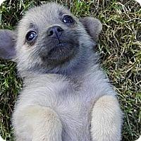 Adopt A Pet :: NALA - Hesperus, CO