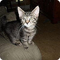 Adopt A Pet :: Betty - Norwich, NY