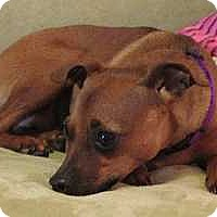 Adopt A Pet :: Mandi - McDonough, GA