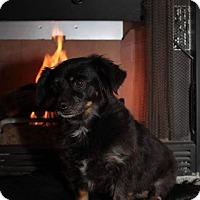Adopt A Pet :: Onyx - Alamogordo, NM