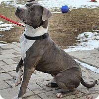 Adopt A Pet :: PRINCE - New Windsor, NY