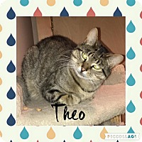 Domestic Shorthair Cat for adoption in Mount Laurel, New Jersey - Theodore