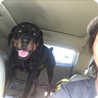 Adopt A Pet :: Clyde - Gilbert, AZ