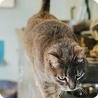 Adopt A Pet :: Teresa - Indianapolis, IN