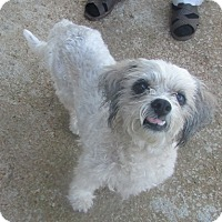 Adopt A Pet :: Teddy - House Springs, MO