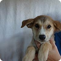 Adopt A Pet :: Jane - Oviedo, FL