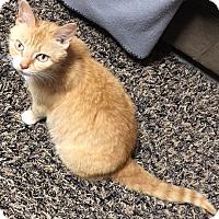 Adopt A Pet :: Libra - Youngsville, NC
