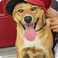 Adopt A Pet :: Missy - Eustis, FL