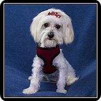 Adopt A Pet :: Brandi - Fort Braff, CA