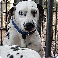 Adopt A Pet :: Roxie - Newcastle, OK