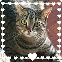 Adopt A Pet :: ElleBelle - Columbus, OH
