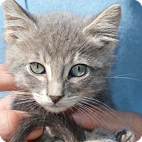 Adopt A Pet :: Emma - Stanford, CA