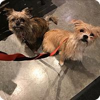 Adopt A Pet :: Princess (pending adoption) - Montreal, QC