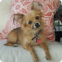 Adopt A Pet :: Mocha - conroe, TX