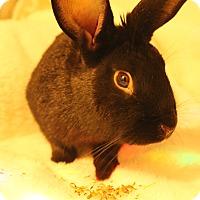 Adopt A Pet :: Hamilton - Hillside, NJ
