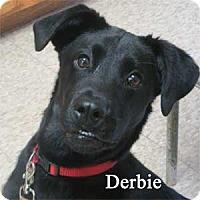 Adopt A Pet :: Derbie - Warren, PA