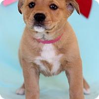 Adopt A Pet :: Vanna - Waldorf, MD