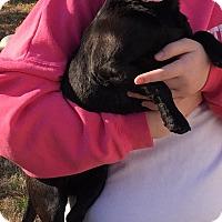 Adopt A Pet :: Fiona - Hampton, VA
