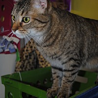 Adopt A Pet :: Titania - Bay City, MI