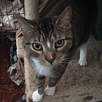 Adopt A Pet :: MULTIPLE CATS - Wanaque, NJ