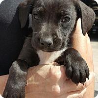Adopt A Pet :: Tybee - Allentown, NJ