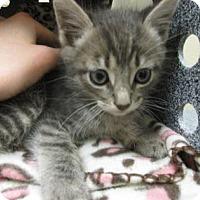 Adopt A Pet :: Slinky - Irving, TX