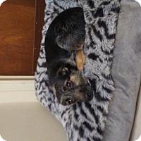 Adopt A Pet :: Bellah - Randleman, NC