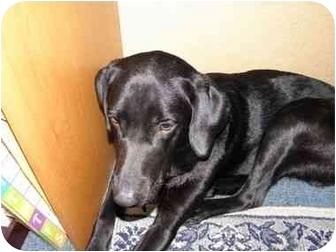 Labrador Retriever Mix Dog for adoption in Little River, South Carolina - Pepper