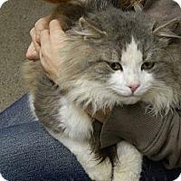 Adopt A Pet :: Marvin - East Hanover, NJ