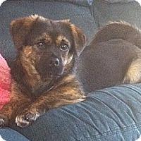 Adopt A Pet :: Milo - Hamilton, ON