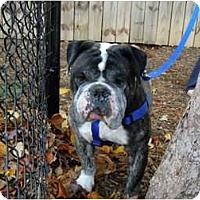 Adopt A Pet :: Logan - Winder, GA