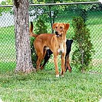 Adopt A Pet :: Beau - Douglas, ON