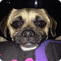 Adopt A Pet :: Charlie - Anaheim, CA