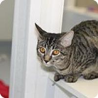 Adopt A Pet :: Emmie - El Cajon, CA