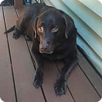 Adopt A Pet :: Tootsie - Manchester, NH