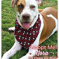 Adopt A Pet :: Nora - Queen Creek, AZ