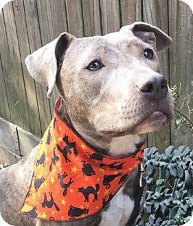 Terrier (Unknown Type, Medium)/Labrador Retriever Mix Dog for adoption in Kingwood, Texas - Duckie